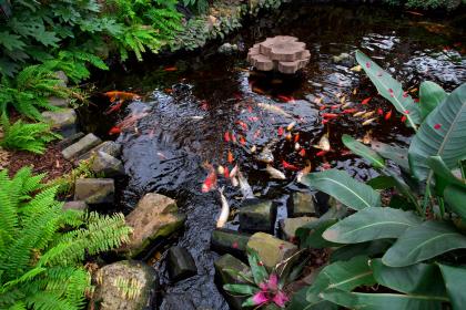Meer leven in je tuin met een vijver