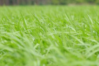 Graszoden zelf leggen of uitbesteden?